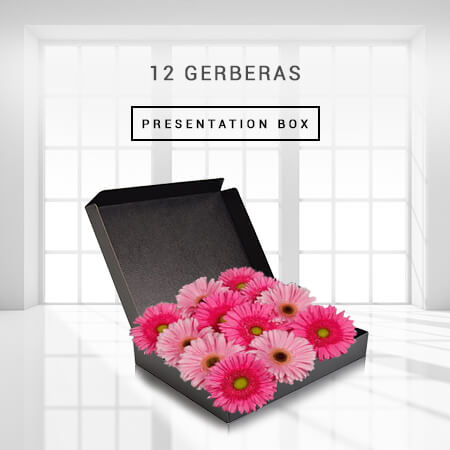Image of 12 Gerberas - Boxed
